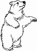 Bear Coloring Pages Bears Standing sketch template