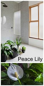 peace lily in bathroom 28 images 68 best bath remodel With peace lily in bathroom