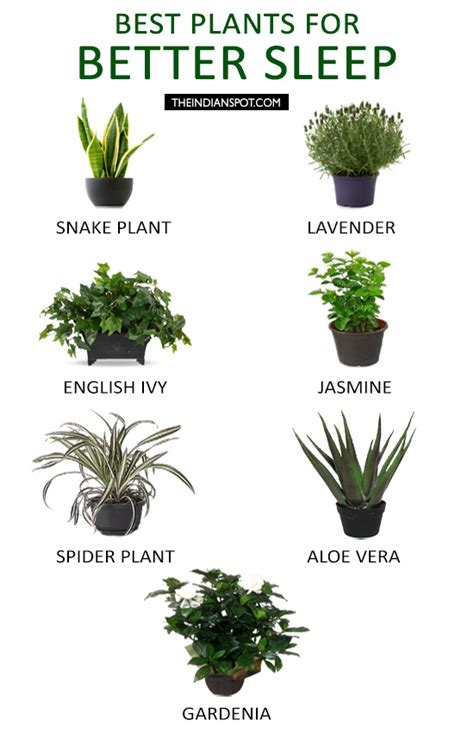 plants  purpose  types  greenery
