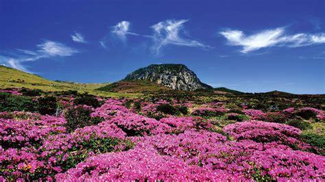 jeju island korea life landscape photo wallpaper