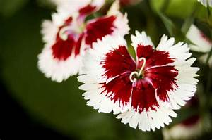 Red and White Flowers by perfect12386 on DeviantArt