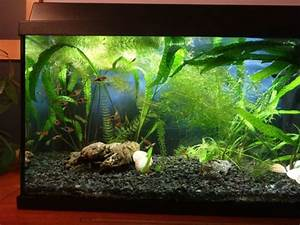 Aquarium 120l Mit Unterschrank : juwel aquarium kaufen juwel aquarium gebraucht ~ Frokenaadalensverden.com Haus und Dekorationen