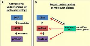 A  Schematic Of The Classical Dogma Of Molecular Biology And  B  The