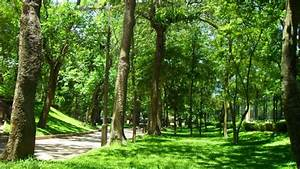 Stocksee Park Und Garden 2017 : green parks to relax in the heart of downtown hanoi tnk ~ Lizthompson.info Haus und Dekorationen