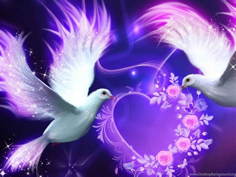 beautiful love birds nokia lumia  hd wallpapers love
