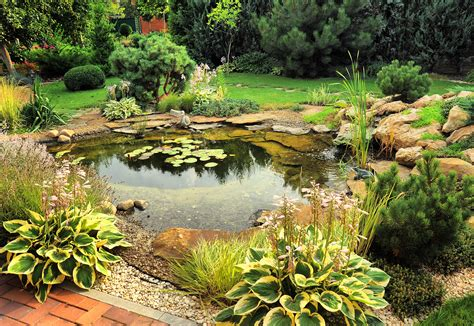Garden Pond : Natural Backyard Ponds