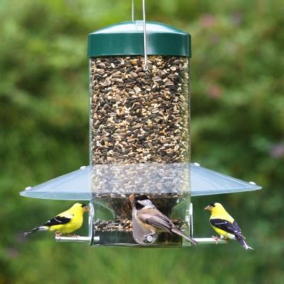 bird feeders guide patterns