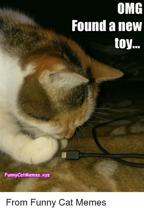 New Cat Meme - funny catmemesxyz omg found a new toy from funny cat memes meme on sizzle