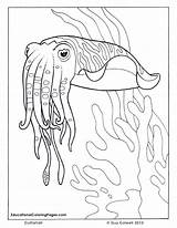 Coloring Ocean Pages Cuttlefish Sea Animal Fish Printable Adult Adults Animals Seashore Drawings Colouring Realistic Sheets Books Bing Preschoolers Outline sketch template