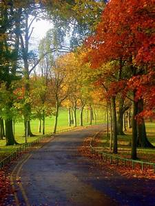 country road in fall | Castle | Pinterest | Otoño, Paisaje ...