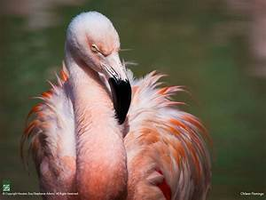17 Best images about Flamingos on Pinterest | Africa ...