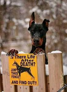 Doberman Pinscher. Funny guard dog sign | ️Dobies ️ ...
