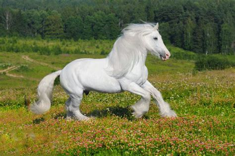 horse wallpapers desktop shire horses backgrounds pretty friesian hd beauty gorgeous amazing