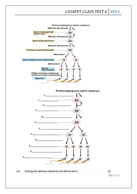 worksheet human reproduction