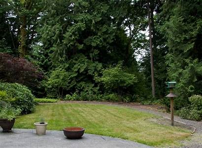 Mulching Yard Backyard Mulch Lapse Animation Landscape