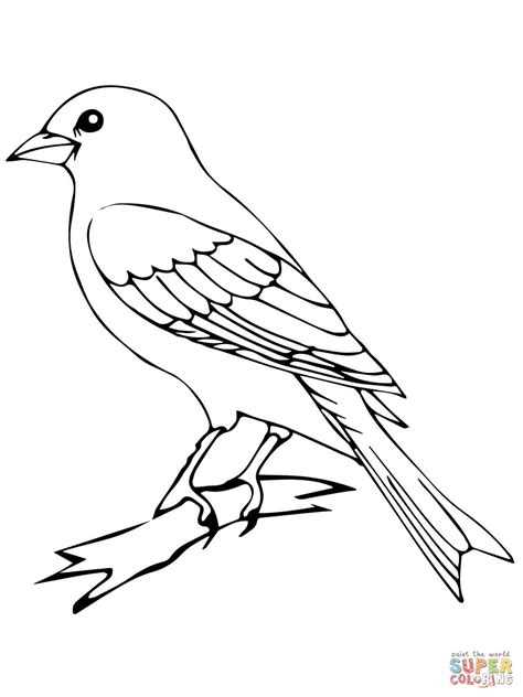 perched canary bird coloring page  printable