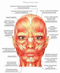 Комплекс упражнения для лица от морщин