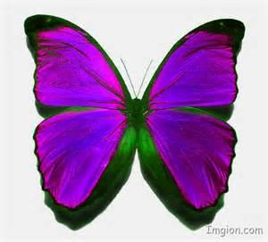 Real Purple Butterfly