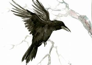 Flying raven artwork black and white art Raven Original