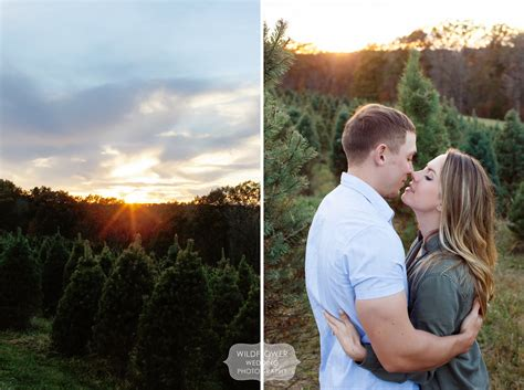 christmas tree farm engagement session in the winter
