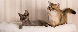 Verkleidung Für Katzen : kletterwand f r katzen katzenm bel f r die wandgestaltung ~ Frokenaadalensverden.com Haus und Dekorationen