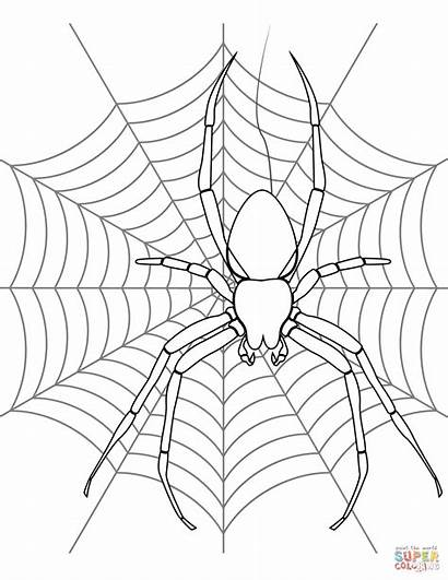 Spider Coloring Web Pages Halloween Spiders Drawing
