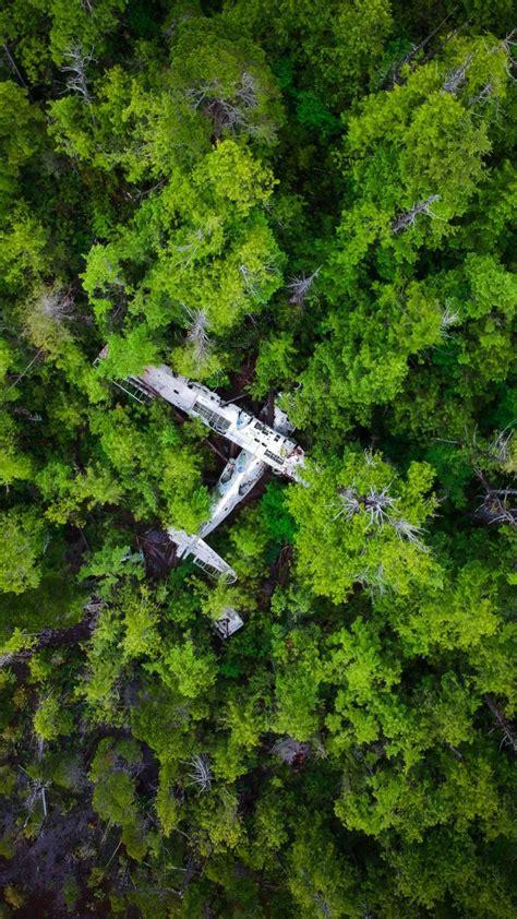 forest green trees wreck aircraft  wallpaper
