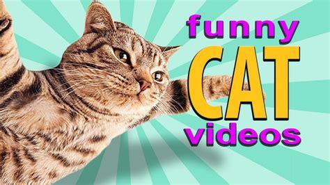 Funny Cat Videos  Flying Cat, Treadmill Cats, Cute