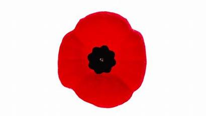 Remembrance Poppy Winnipeg Activities Services Closures Hours