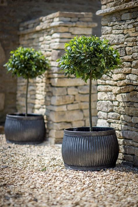 garden pots and planters 17 best images about garden galvanized raised gardens
