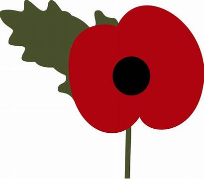 Poppy Remembrance Clipart Clip Transparent Drawing Itv
