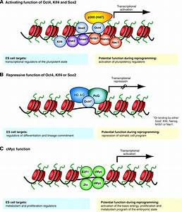Epigenetic reprogramming and induced pluripotency ...