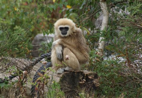 Pet Monkeys For Sale