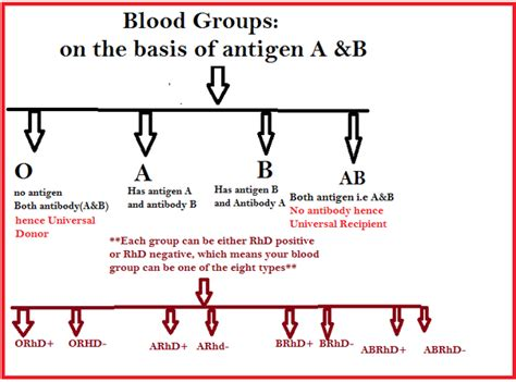 Which Blood Group Is A Universal Recipient?  Quora. Carpet Cleaning In Knoxville Tn. Design Schools In Boston Bedford Self Storage. Program Management Best Practices. Great Culinary Schools Parts Inventory System. Fine For Driving Without Insurance. Build Your Own Online Store Vpn To Download. Voicemail For Business Network Auditing Tools. Cosmetic Dentistry Mobile Al Ba In College