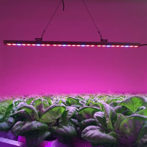 what is the distance between grow light and the pot plant