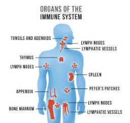 Immune system - Human Body Systems Immune System/AIDS