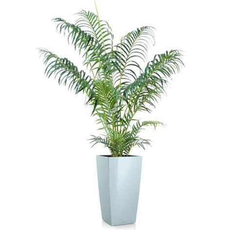 areca artificiel en pot hauteur 110 cm 150 cm et 180 cm