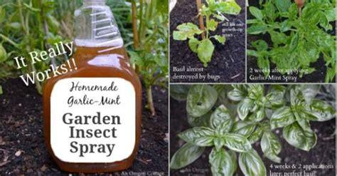 garden bug spray home brewed garden insect spray to keep the bugs away