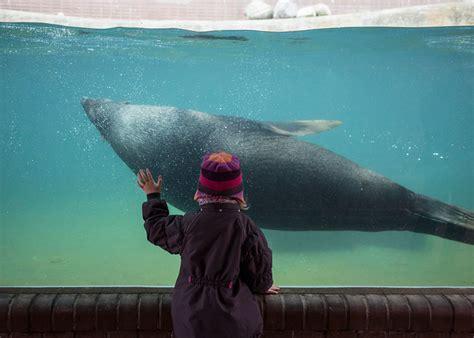 zoo animals sad bars behind berlin change need these lost elias hassos depressing fubiz memolition demilked zoos