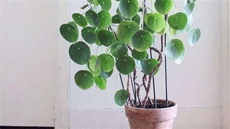 Zimmerpflanzen Die Viel Sonne Vertragen. Beliebtesten Gro
