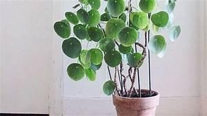 Zimmerpflanze Große Blätter : diese zimmerpflanzen sind absolut pflegeleicht wohnen ~ Lizthompson.info Haus und Dekorationen