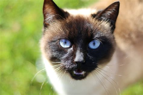Pet, Black Cat, Fauna, Close Up, Whiskers