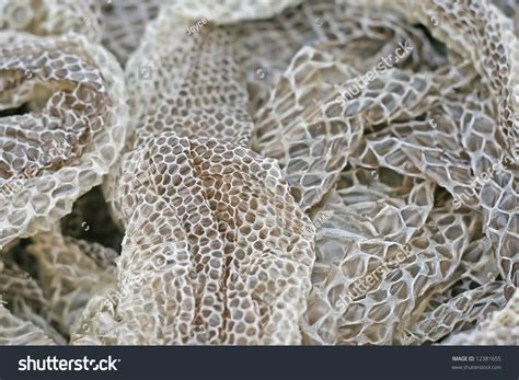shed snake skin display shedded snake skin stock photo 12381655