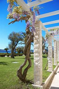 Are Wisteria Roots Aggressive  Learn About The Root System