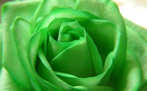 We did not find results for: World's Top 100 Beautiful Flowers Images Wallpaper Photos ...