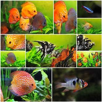kinds  fish  suitable   types
