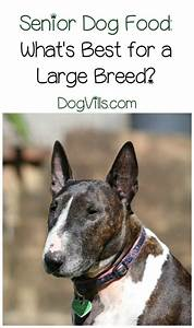 best senior dog food for large breeds With best senior dog food