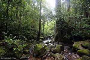 Rainforest creek in Masoala National Park [madagascar ...
