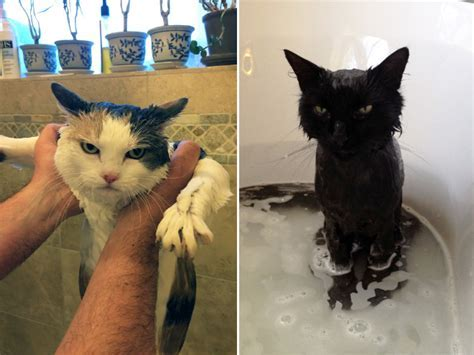 Cats Enjoying a Bath