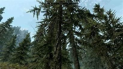 Tree Skyrim Settings Trees Animated Guide Step